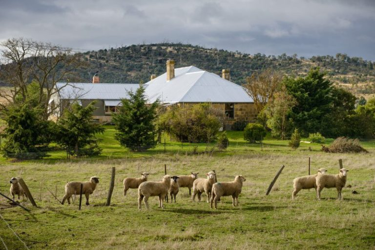 Rathmore House sheep and cottage